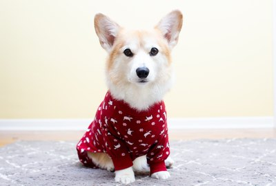 Winter Tips For Pets With Arthritis