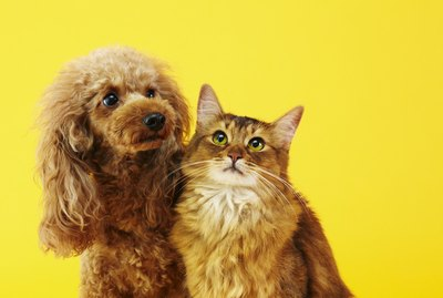 The Difference Between Dog People & Cat People, According to Science