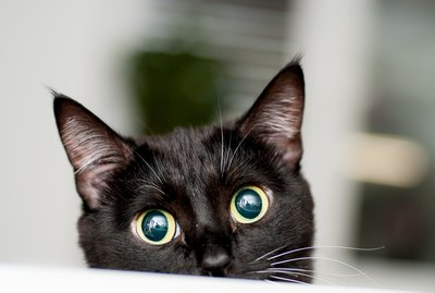 368 Names That Are Perfect For Black Cats