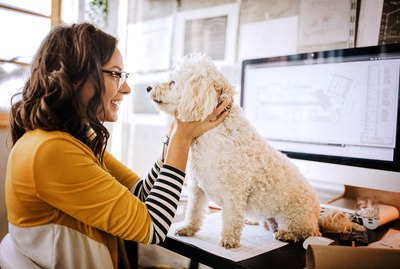 6 Rules For Bringing Your Dog to Work