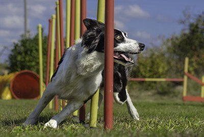 17 Best Mental Exercises For Dogs