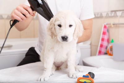 How To Fluff A Dog's Hair After Shampoo