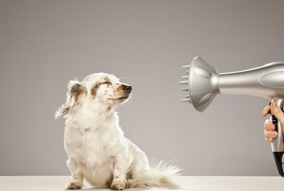 Is It Safe to Blow-Dry a Dog's Hair?