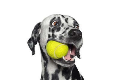 Why Do Dogs Like Tennis Balls So Much?