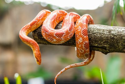 Do Snakes Make Good Pets?
