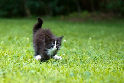 Why Your Cat Runs Around Like A Maniac At Night