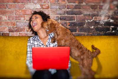 6 of the Best Online Stores For Dog Supplies (Besides Amazon)