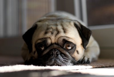 7 Mistakes That Are Making Your Dog Depressed