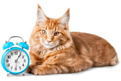 Do Cats Understand Time?