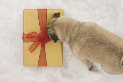 16 Genius Gifts Every New Pet Parent Desperately Needs