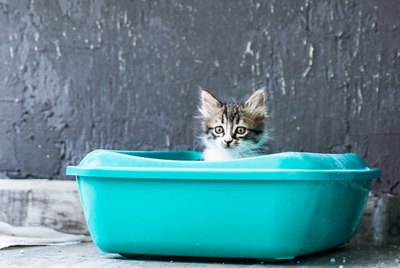 How Often Do Cats Pee?