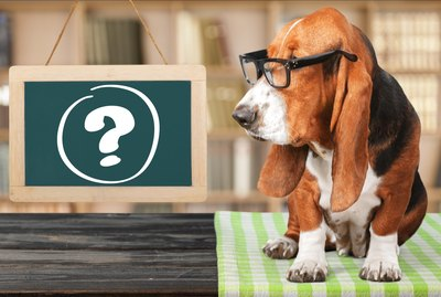 The 6 Weirdest Pet Questions on Quora, Answered