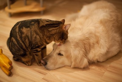 Do Dogs & Cats Really Know When They're Going To Die?