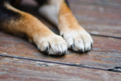 Should I Clean My Dog's Paws After a Walk?