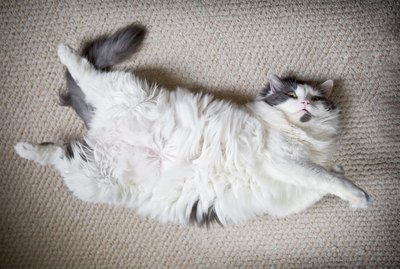 Why Do Cats Show You Their Belly, Then Get Mad When You Touch It?