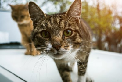 What is a Trap-Neuter-Return Program?