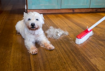 How Do I Keep My Multi-Dog Household Clean?