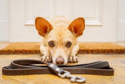 How to Train a Leash-Reactive Dog