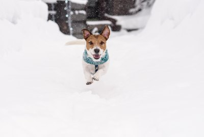Is It Safe For Dogs To Eat Snow?