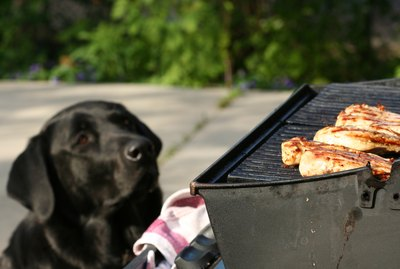 15 Ways To Protect Your Pet From Summer Hazards
