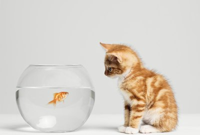 Should Cats Eat Fish?