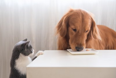 Why Is My Cat Eating My Dog's Food?