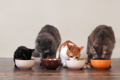 Why Do Some Cats Always Think Their Food Bowls Are Empty?