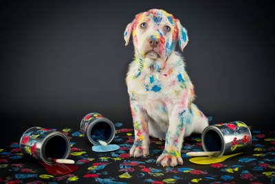 Dogs May See More Colors Than We Thought