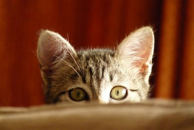 Is My Cat Lonely Without Another Cat?