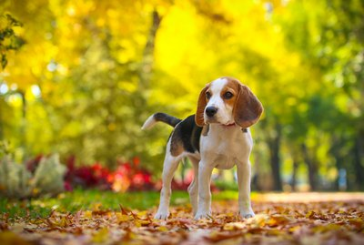 290 Hunting Dog Names For Your Fierce Little Pup