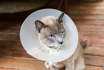 How to Feed a Cat Who is Wearing a Cone Around Its Head