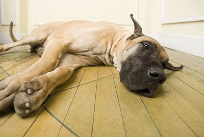 Cryptosporidium In Dogs: Symptoms, Signs, Treatment, & Prevention