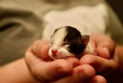 Is It Safe to Touch Newborn Kittens?