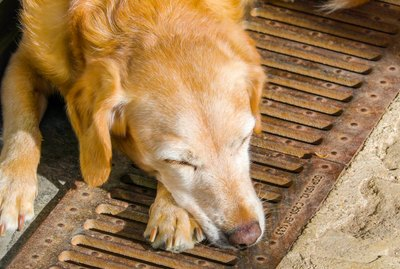 Why Do Dogs Chew Their Feet?