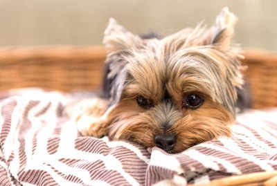 Calming Behaviors in Dogs