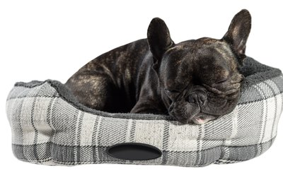How to Train Your Dog to Sleep in Another Room