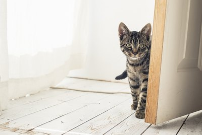 How to Keep Cats From Opening Doors