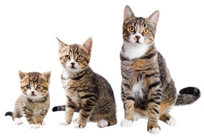 When Do Cats Stop Growing? Reliable Ways to Know When Cats Reach Their Full Size