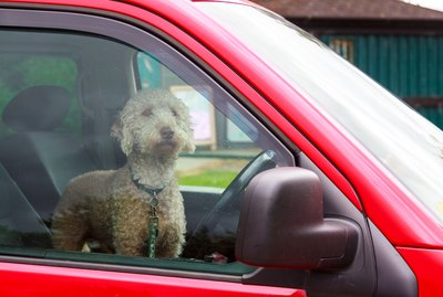 What To Do When You See A Dog Locked In A Hot Car