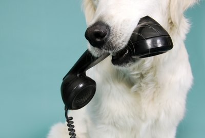 Do Dogs Recognize Your Voice on the Phone?