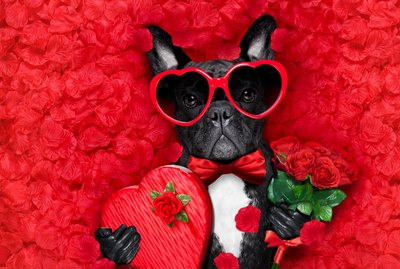 22 Thoughts You Have When Your Pet is Your Valentine