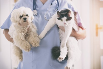 How Much Does Pet Insurance Cost for Dogs and Cats?