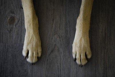 How to Fix My Dog's Split Nails
