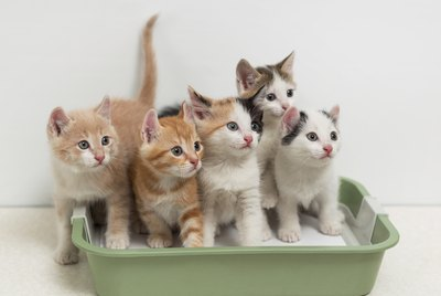 Should You Be Using a Self-Cleaning Litter Box?