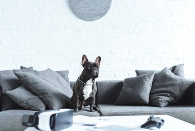 Why Did My Dog Suddenly Start Urinating on Furniture?
