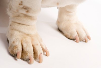 Home Remedies for Stopping a Dog's Nails from Bleeding