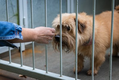 How to Give up Your Dog to the Humane Society