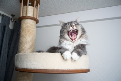 How to Choose the Best Scratching Post for Your Cat's Scratching Style