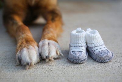 How to Protect Your Dog's Paws if They Won't Wear Booties