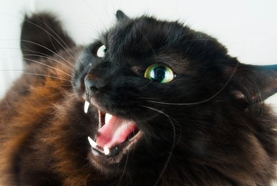 What to Do if a Cat Bites You